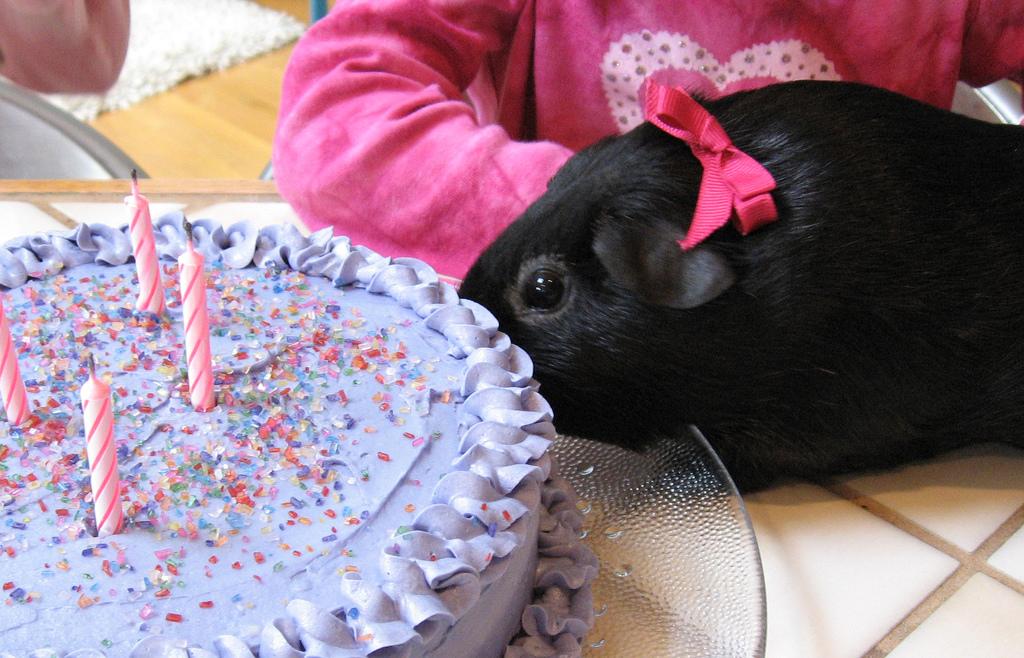 hold fødselsdag
